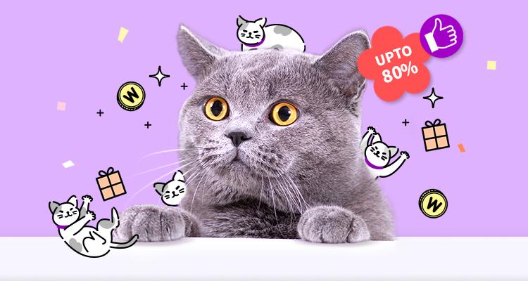 고양이대통령 슈퍼 빅세일