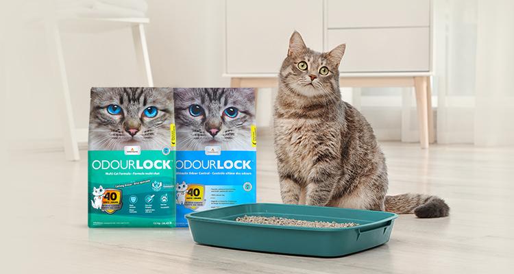 단 1% 고양이를 위한 귀족모래 오더락
