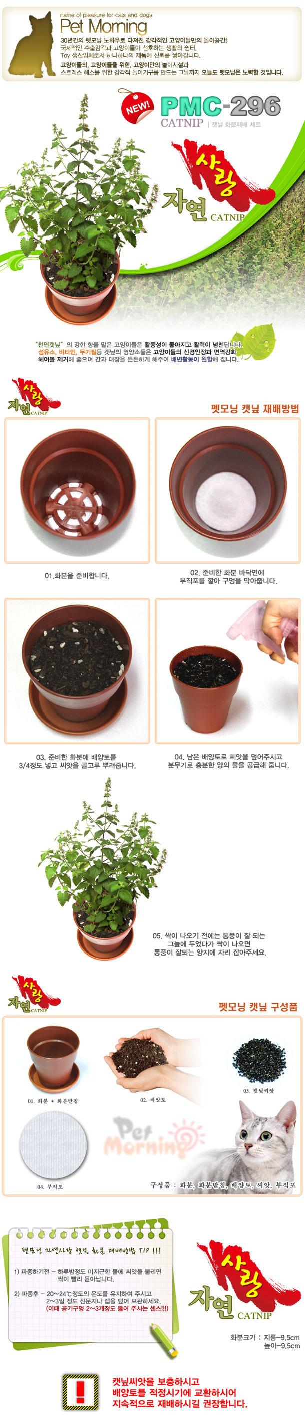 펫모닝 캣닢 화분재배 세트